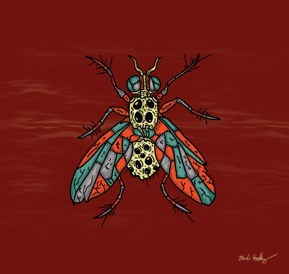 Spider Fly - Creature Collection - Illustrated by Mark Sheldon Boehly - Graphicsbyte Creative